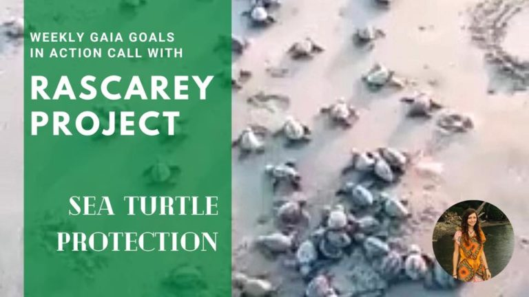 Sea turtle Sanctuary – Brittni